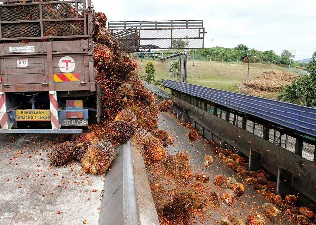 Palm Oil Trade – Malaysia and India Aim to Repair Soured Ties